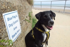 Dog control sign at Mundesley Beach