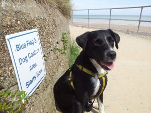 Sam at the dog control sign on Mundesley Beach